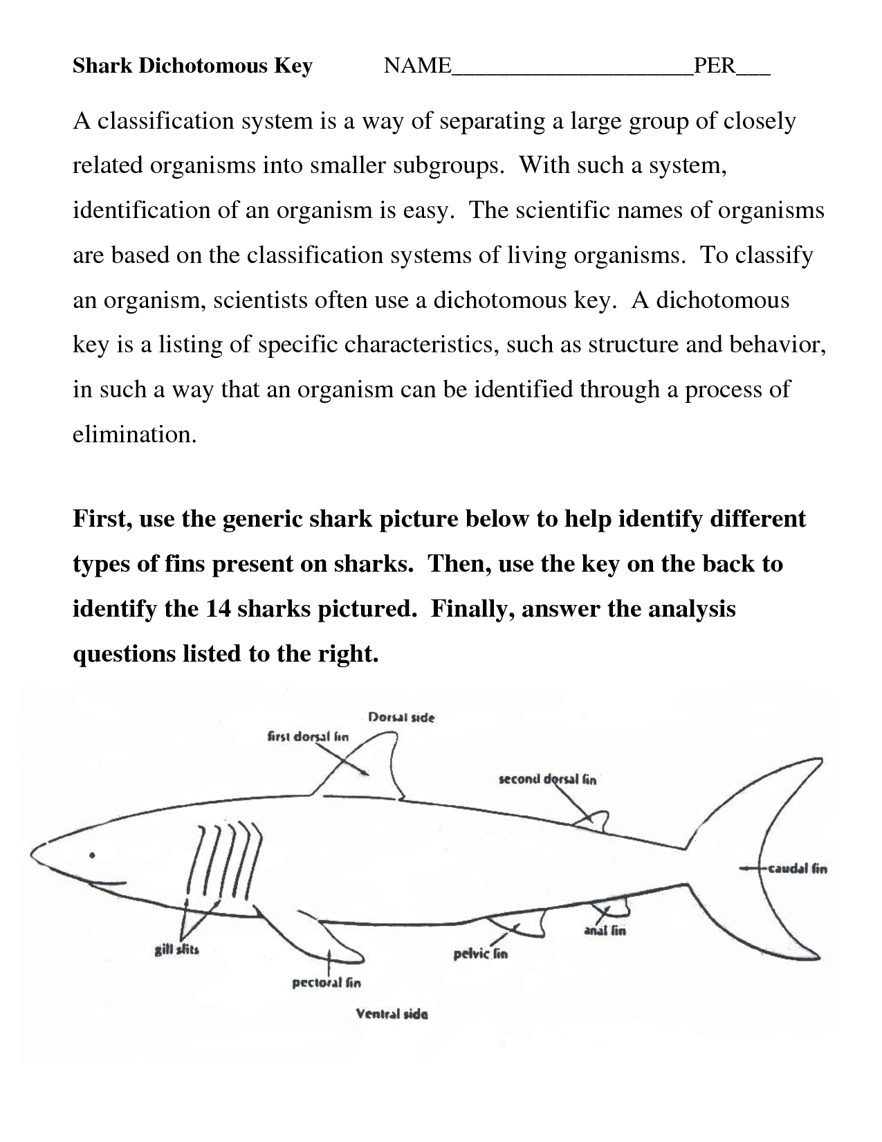 worksheet Dichotomous Key Worksheet Fiercebad Worksheet And – Shark Worksheets